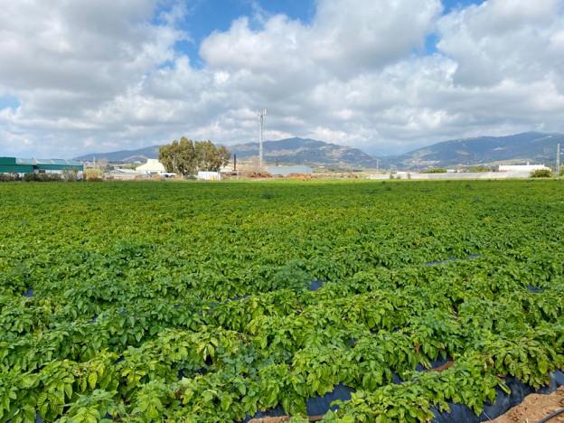 campo-patatas